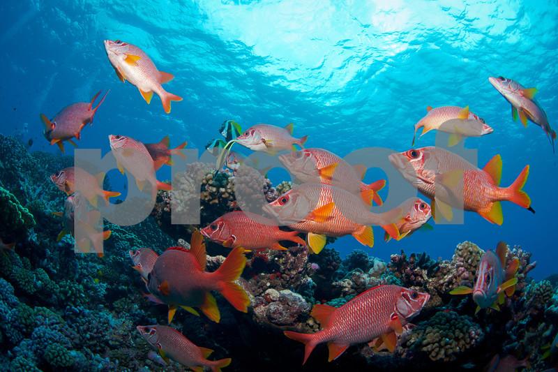 French Polynesia,Fakarava,diving